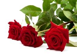 dark red rose on white background