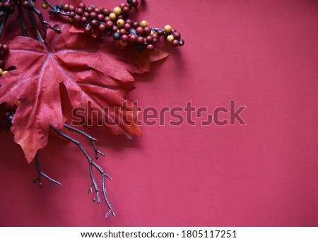 Dark Rich Red Leaves Berries and Brown Twig Framing Blank Maroon Background Autumn Leaf Fall Colors Halloween Thanksgiving Christmas Copy Space for Advertisements and Stationary October November Foto stock ©