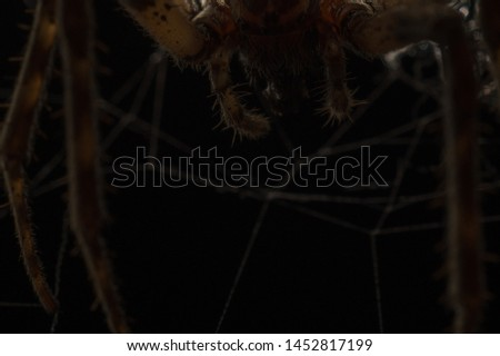 Dark scary background image. Close-up spider very close on a black night background hanging over us. Muzzle and front legs of a spider macro photo