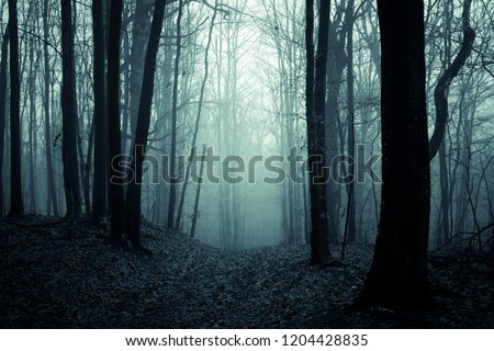 dark scary forest path, fantasy landscape