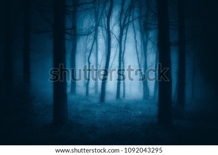 Stock Photo dark scary forest with creepy trees
