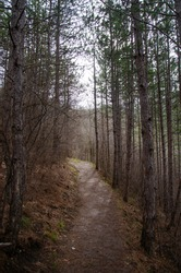 Dark, scary road trough the forest, dense coniferous forest around the path, sunlight in the distance