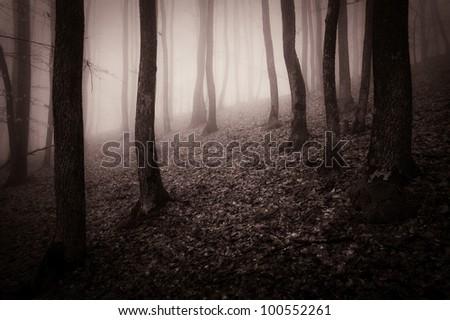 dark sepia forest - stock photo