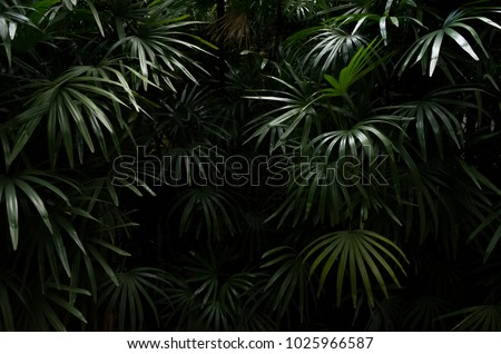 Dark shadow of Tropical leaves background