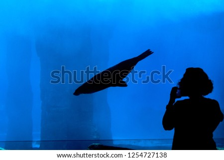 dark silhouette of seal diving in aquarium with person standing in from of glass taking picture