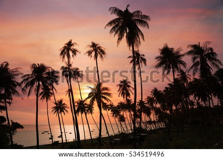 Stock Photo Dark silhouettes of coconut palm trees and amazing cloudy sky on sunset at tropical place Mui Ne, Vietnam