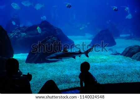 Dark silhouettes of man and boy watching sharks and small fish in the Lisbon Oceanarium, Portugal; man is taking photos