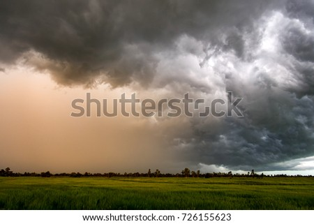 Dark sky and dramatic black cloud before rain.Big rainy storm and rice field #726155623
