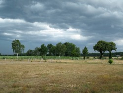 Dark sky behind the trees an dried out landscpae promise a lot of rain