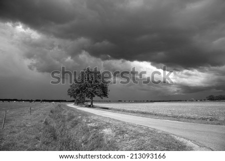 Dark sky with solitary tree in black and white