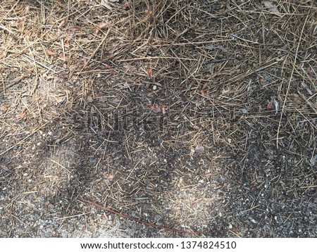 Dark soil with mulched straw piled up.