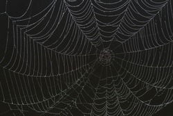 dark, spooky spider web over a lake on a foggy morning
