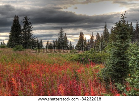 Dark storm clouds form over the Alaskan countryside in fall with red fireweed and spruce trees.