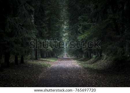 Dark terrible forest with path in the middle. Huge trees in night. Lost in forest background #765697720