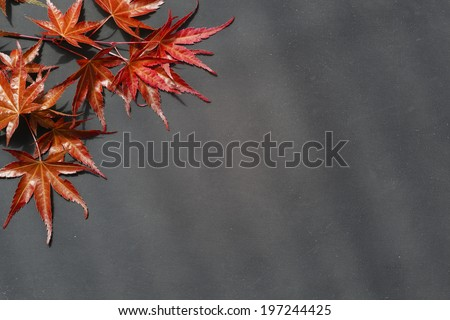 Darker worn background, framed with red maple leaves on Japanese Maple.