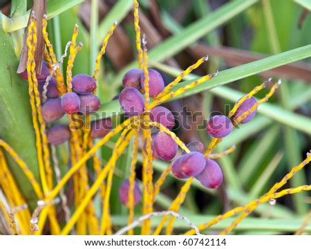 date palm seeds. stock photo : Date palm seeds