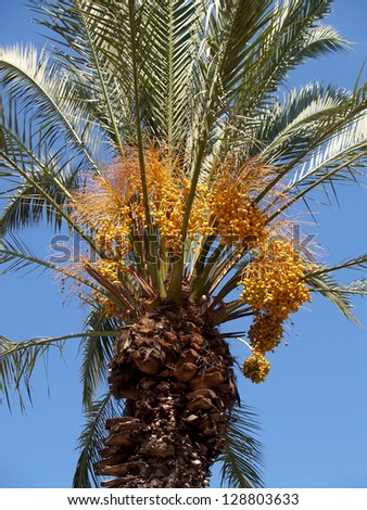 Date palm tree against the sky