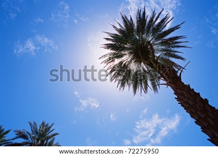 date palm tree in desert. date palm tree in desert. stock photo : Date palm tree - IS817-190