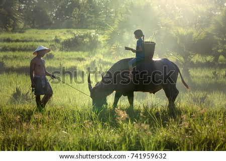 Daughter and dad this is lifestyle of family farmer  in this pic. Traditional life of famer in countryside Thailand. Education of child on the back buffalo  in  rice field.