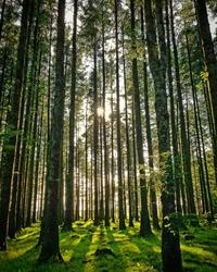 Davidstow Woods On A Summer Cornish Sunset