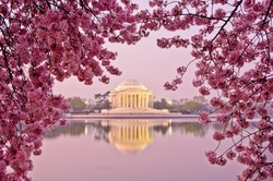 Dawn at the Jefferson Memorial during the Cherry Blossom Festival. Washington, DC