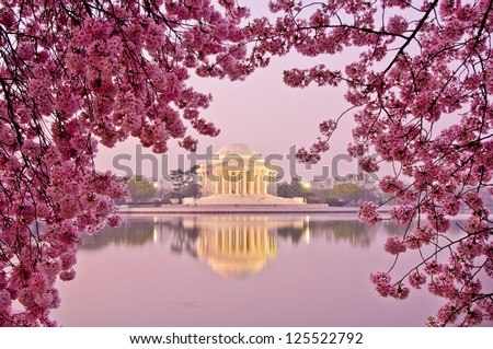 Dawn at the Jefferson Memorial during the Cherry Blossom Festival. Washington, DC - stock photo