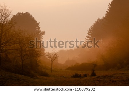 Dawn in the dune forest