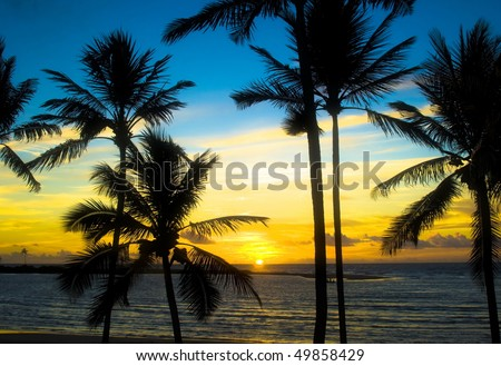 Dawn in the Tropic - stock photo