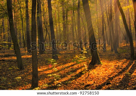 Dawn in wood, HDR  image - stock photo