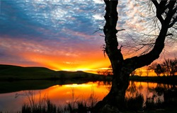 Dawn on the forest lake. Red dawn and tree lake. Lake tree at red dawn scene