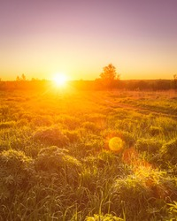 Dawn or sunset in a spring field with green grass, lupine sprouts, fog on the horizon and clear bright sky. Sunbeam on a foreground.