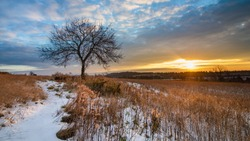 Dawn over a snowy field with a lone tree in eastern Pennsylvania in winter