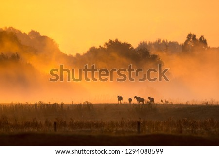 Dawn over the fields at Dedham #1294088599