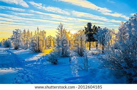 Dawn over winter nature landscape. Winter at dawn. Winter snow nature at dawn scene