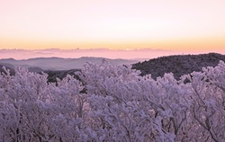 Dawn view of snow and hoarfrost on branches of tree against mountain ranges at Taebaeksan Mountain near Taebaek-si, South Korea