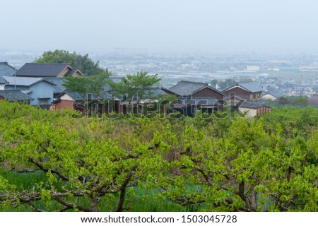 Dawn vineyard and Nara cityscape #1503045728
