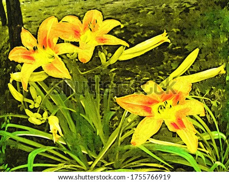 Daylily flower (Hemerocállis) in a the garden in the style of oil painting Fauvism
