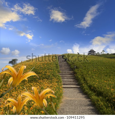 daylily in the mountain with beautiful cloudscape background