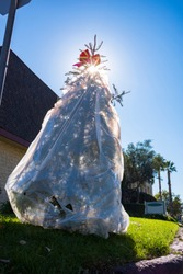 Days after the Christmas holiday, a live Christmas tree, wrapped in a plastic trash bag, is thrown away to the curbside for trash pick up in a suburb of a major U.S. city.