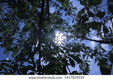 Dazzling sunshine Summer sunshine blue sky Sunbeams #1457859014