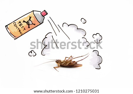 DDT spraying to kill cockroach , pest control service concept