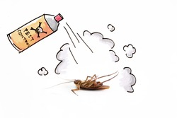 DDT spraying to kill cockroach , pest control service concept, exterminator service