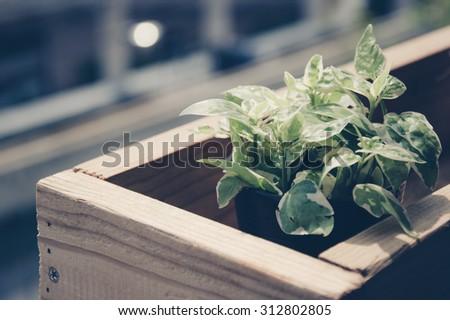 de focus ,selective focus plants in pots in wooden box on the terrace filter instagram