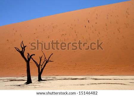Dead acacia trees at Dead Vlei, Namib desert, Sossusvlei, Namibia