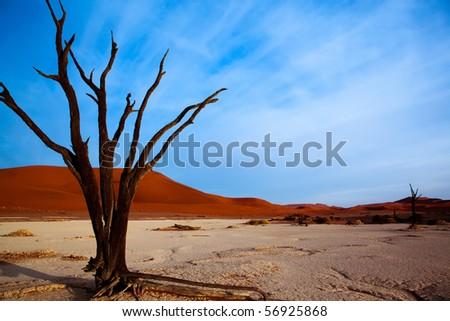 Dead acacia trees in desert, Dead Vlei, Namibia
