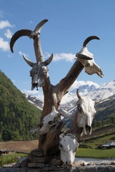 Dead animal skulls in front of high altitude glacier lake in mountains