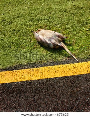 Dead armidillo on side of road
