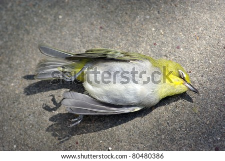 dead bird - stock photo