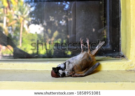 Photo of  Dead bird on a glass window. Bird hitting or crashing into house or building accident.
