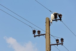 Dead bird on high voltage electricity wires, killed young stork